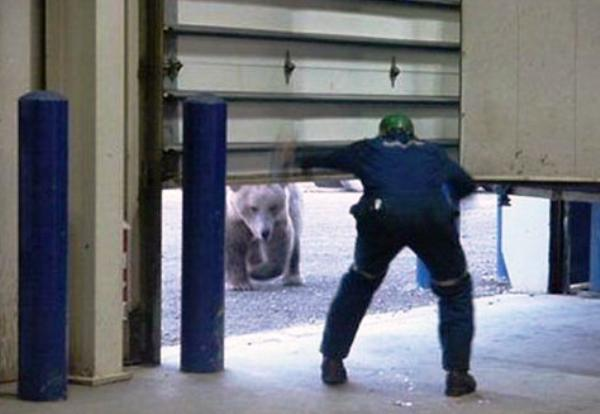 Bear Is Under Garage Door Pic