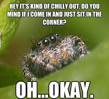 misunderstood spider meme come inside The Sad World Of The Misunderstood House Spider