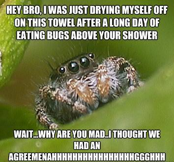 misunderstood spider meme eating bugs The Sad World Of The Misunderstood House Spider