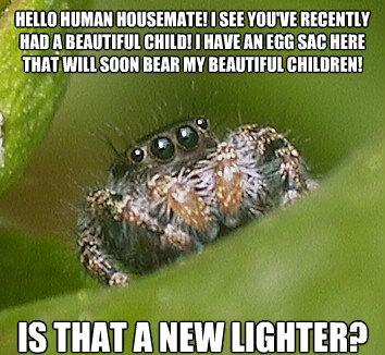 misunderstood spider meme family new lighter The Sad World Of The Misunderstood House Spider