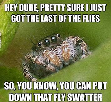 misunderstood spider meme flies fly swatter The Sad World Of The Misunderstood House Spider