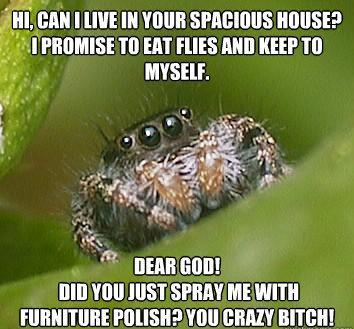 misunderstood spider meme furniture polish The Sad World Of The Misunderstood House Spider