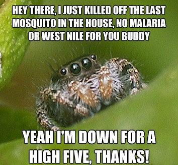 misunderstood spider meme high five The Sad World Of The Misunderstood House Spider