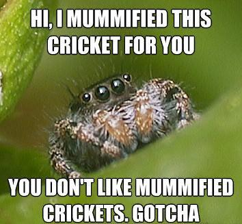 misunderstood spider meme mummified crickets The Sad World Of The Misunderstood House Spider