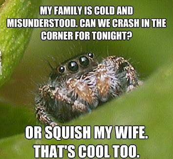 misunderstood spider meme squish wife The Sad World Of The Misunderstood House Spider