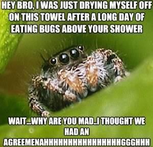 misunderstood-spider-meme