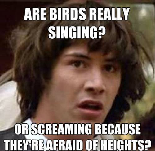 conspiracy keanu birds Conspiracy Keanu: Tales Of The Stoner Sage