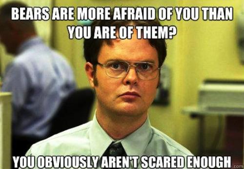 Dwight Schrute Meme Bears