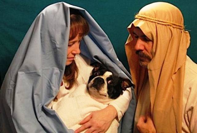 Funny Christmas Cards Dog Virgin Birth Photo