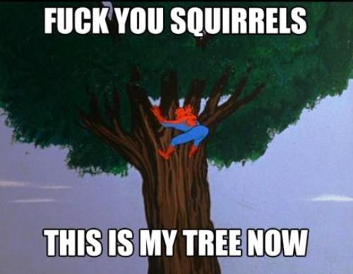 The 1960s Vintage Spiderman Meme Squirrels