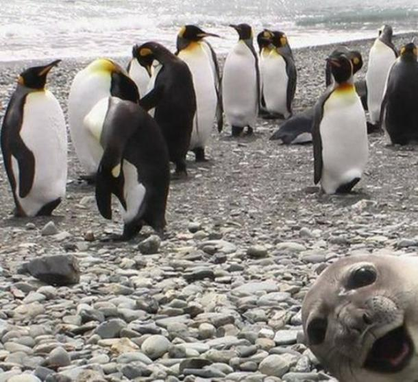 Best Photobombs Seal Bomb