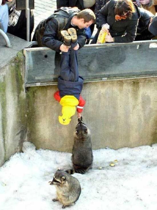 parenting-fail-feeding-raccoons