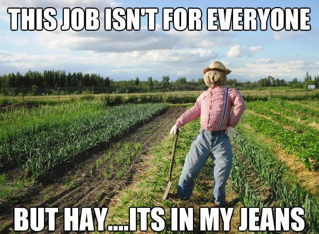 Scarecrow Meme In My Jeans