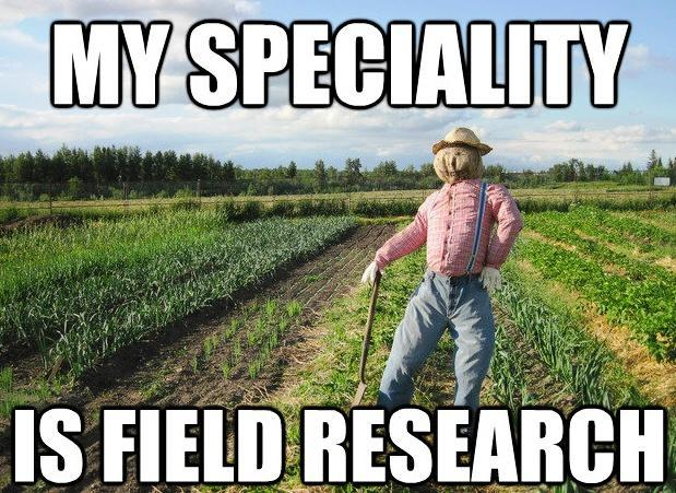 Scarecrow Is Doing Field Research