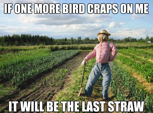 Scarecrow Covered In Bird Crap