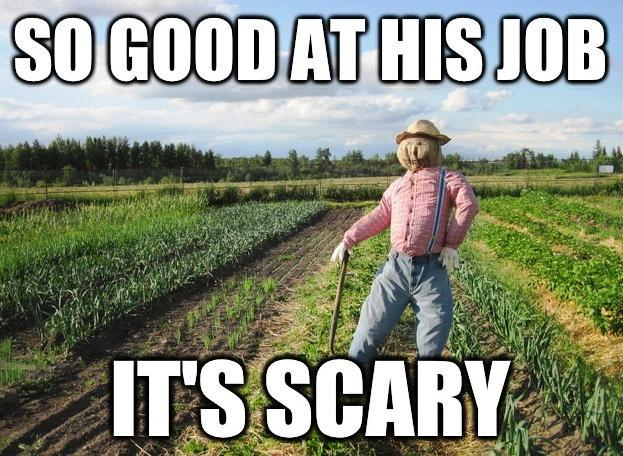ScareCrowMeme ROTW 17 The Best Of The Scarecrow Meme