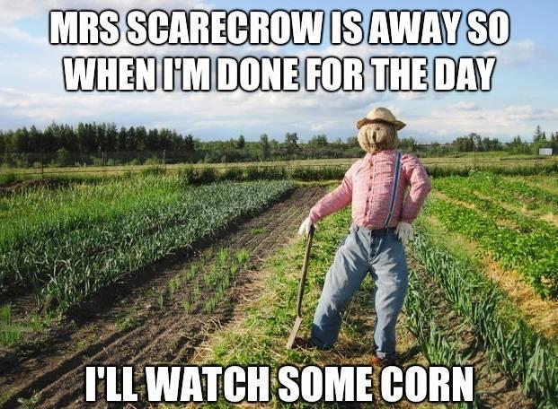 Misses Scarecrow