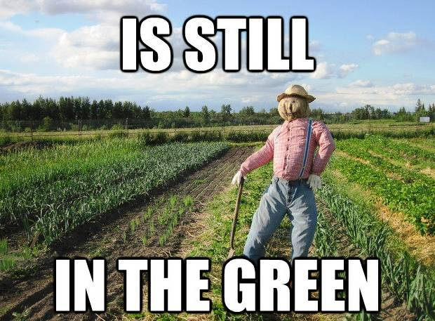 Scarecrow Meme In The Green