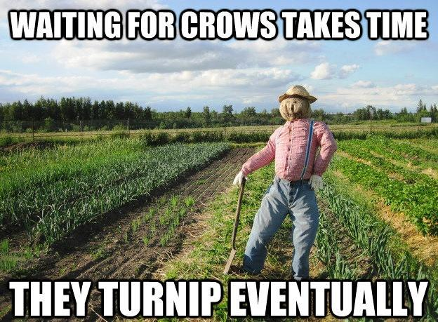Funny Scarecrow Waiting For Crows