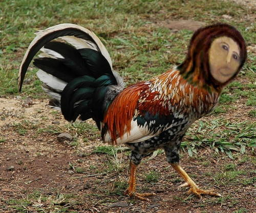 Restoring The Rooster with Monkey Jesus
