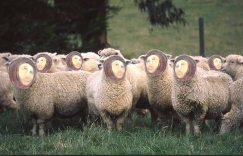 The Restoration Of Sheep
