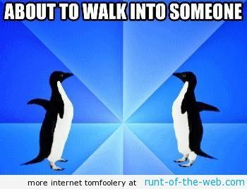 socially-awkward-penguin-walking