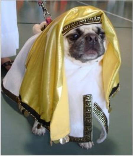halloween-pug-arab