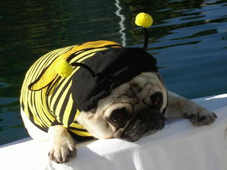 Best Pug Costumes Bee