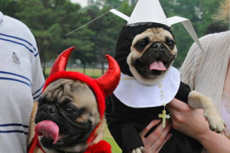 Halloween Pugs Catholics
