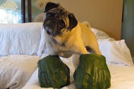 Halloween Pugs Hulk
