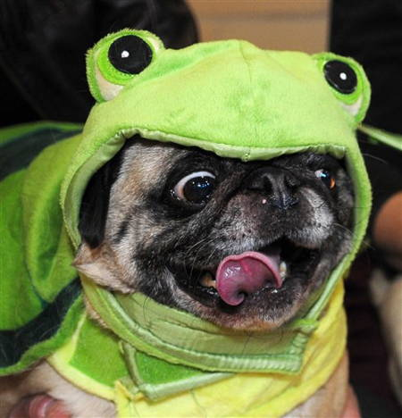 Best Pug Costumes Known To Man Kermit