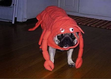 Halloween Pugs Lobster Costume