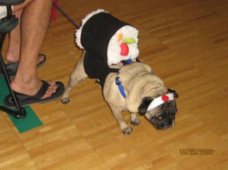 Halloween Pugs Sushi