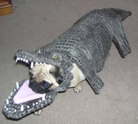 Halloween Pug Costume Gator