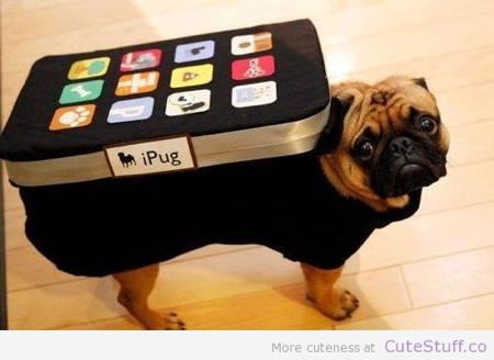 Halloween Pugs iPhone