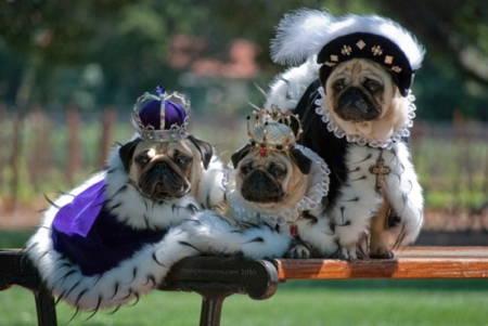 Halloween Pug Costume Royal