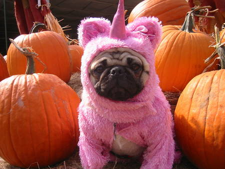 Best Pug Costumes Unicorn