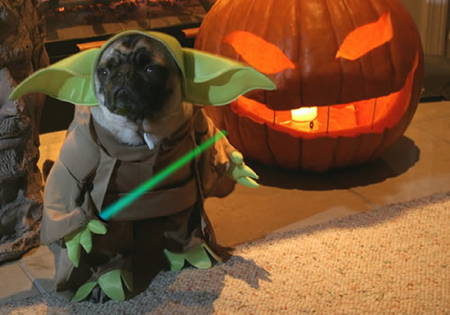 Halloween Pugs Yoda