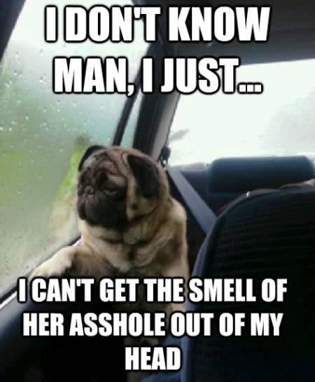 Pug Smell Her Ass