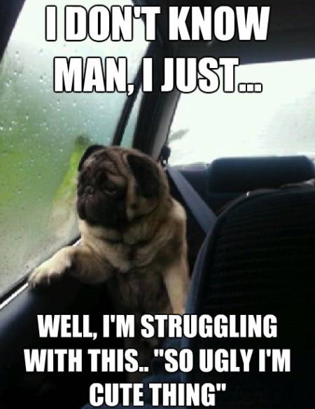 Pug Meme So Ugly It's Cute