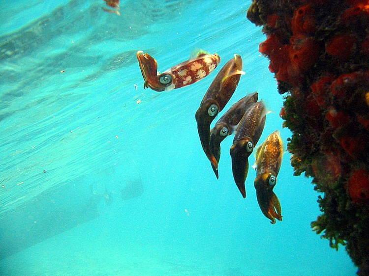 fantastic-coral-reef-creatures