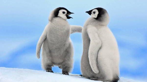 cute-baby-penguin-6