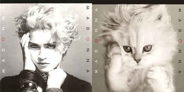 Kitten Inspired Album Madonna