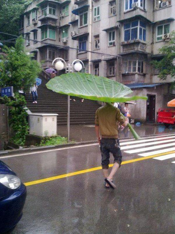 Giant Leaf Used As Umbrella