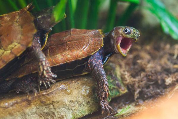 best-pictures-week-turtles