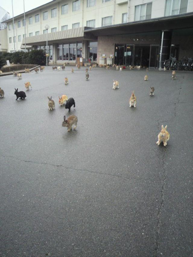 best-viral-pictures-bunnies