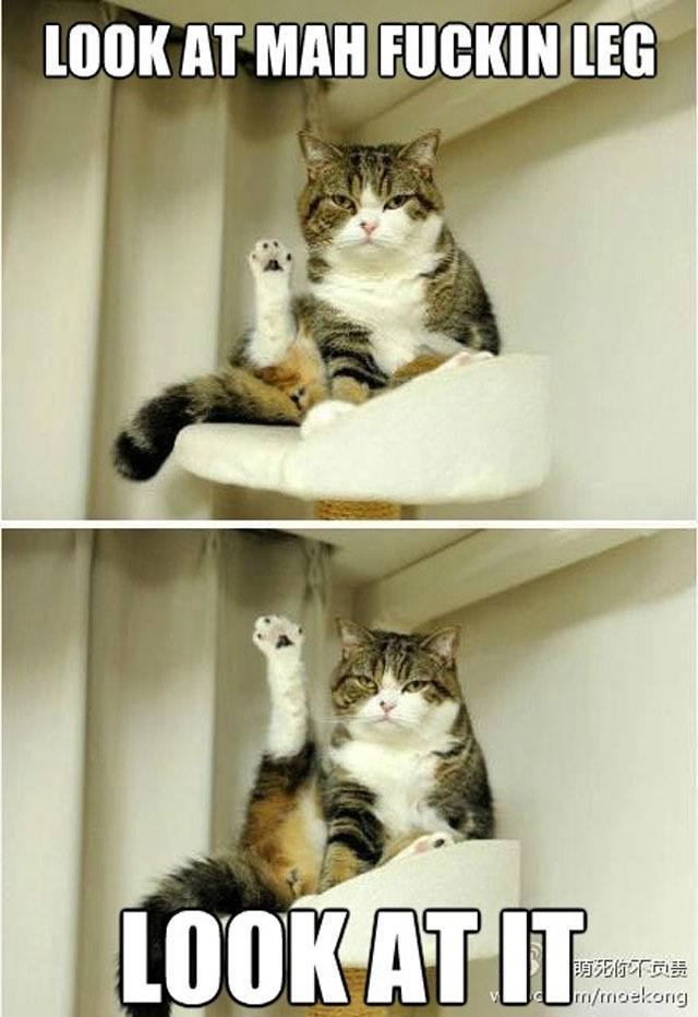 best-viral-pictures-cat-leg