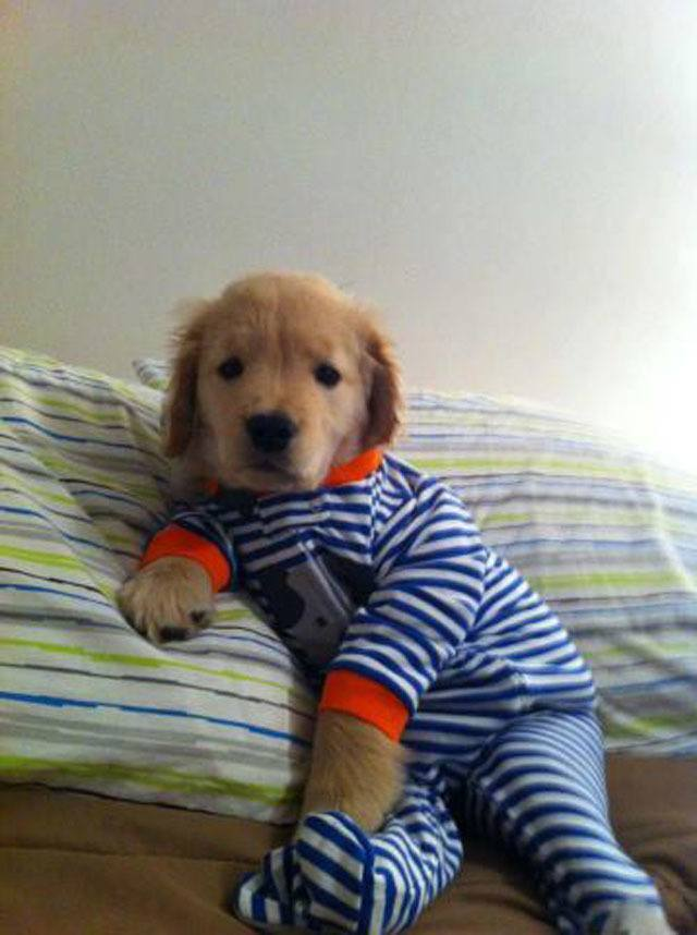 best-viral-pictures-dog-pajamas