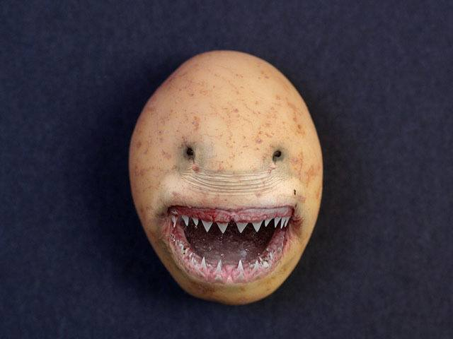 Potato Shark Best Viral Pictures
