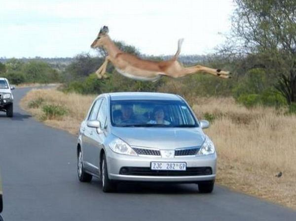 best-viral-pictures-of-week-car-jump